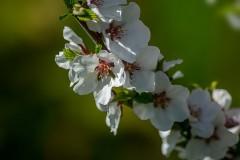 Цвет весны ( 7 мая 2013 г.)