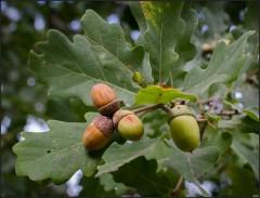 О плодах, востребованных в детстве ( Снимок сделан 26 августа 2013 г.)