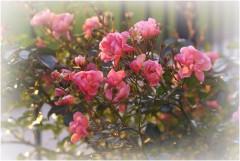 Последние цветы_3