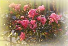 Последние цветы_2