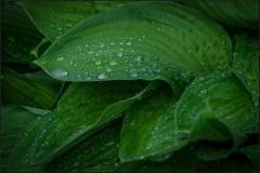 Удерживая капли дождя