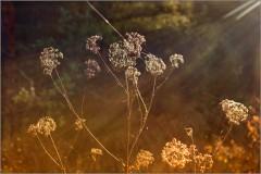 Свет являющий сокрытое ( Снимок сделан 14 октября 2013 г.)