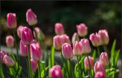 Цветочные краски весны ( Снимок сделан 12 мая 2013 г.)