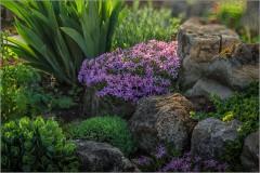 Среди камней ( Снимок сделан 14 мая 2013 г.)