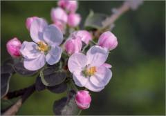 Цвет весенний (снимок сделан 14 мая 2015 г.)
