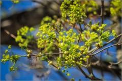 Сочные краски весны ( Снимок сделан 7 мая 2013 г.)