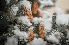 Мороз снежком окутывал... ( Снимок сделан 5 января 2013 г.)