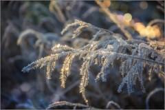 Зима украшает бриллиантами (снимок сделан 27 ноября 2014 г.)
