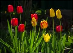 Цветы весны ( Снимок сделан 6 мая 2014 г.)