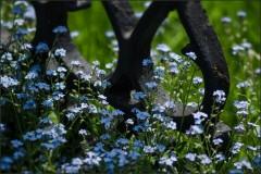 Мертвое среди живых ( Снимок сделан 20 мая 2013 г.)
