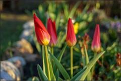 Цветы весны ( 5 мая 2013 г.)