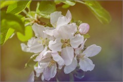 «Мелодия весны» (снимок сделан 14 мая 2015 г.)