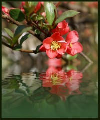 Пробуждение или весна в разгаре