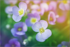«Цветочные фантазии» (снимок сделан 10 мая 2015 г.)