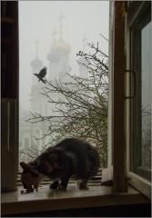 Завтрак в туманное утро (снимок сделан 6 ноября 2014 г.)