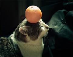 Цирковые способности Мурза ( Снимок сделан 25 августа 2013 г.)