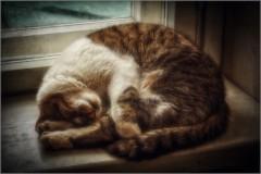 Сон с поджатыми лапами (снимок сделан 22 января 2015 г.)