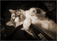 Мечты кота фотографа (снимок сделан 20 октября 2010 г.)