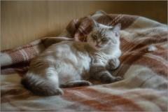 Мама кошка ( Снимок сделан 4 ноября 2013 г.)