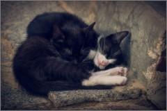 Спят усталые зверушки (снимок сделан 4 сентября 2015 г.)