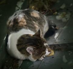Отдых от ночных трудов ( 14 сентября 2012 г.)