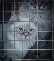 Заключенные (снимок сделан 10 янаваря 2015 г.)