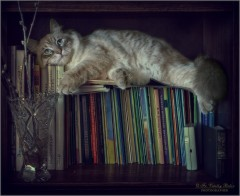 Когда о паразитах я прочту, не то, что есть, и спать я не могу (снимок сделан 17 мая 2012 г.)
