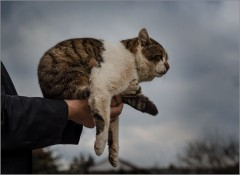 Восседающий Мурзик ( Снимок сделан 24 апреля 2013 г.)