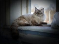 Взгляд с прищуром (снимок сделан 24 марта 2014 г.)