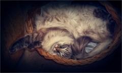 Кошка в лукошке (снимок сделан 30 апреля 2015 г.)