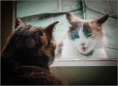 Разборки через стекло (снимок сделан 16 ноября 2014 г.)