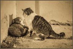 Мурз и его жертва ( 23 апреля 2013 г.)