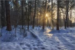 В зимнем лесу ( Снимок сделан 15 января 2013 г.)
