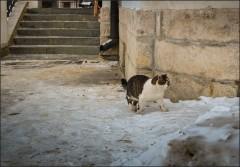 Мурз в дозоре ( Снимок сделан 11 января 2013 г.)