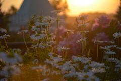Палитра летнего заката ( 17 июня 2012 г.)