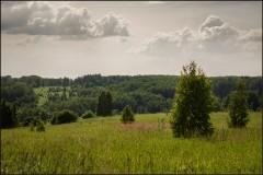 Летнее приволье ( Снимок сделан 3 июня 2013 г.)