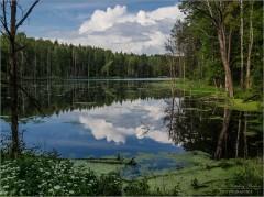 Цветущее озеро (снимок сделан 16 июня 2016 г.)