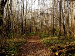 И снова размышления в Оптинском лесу
