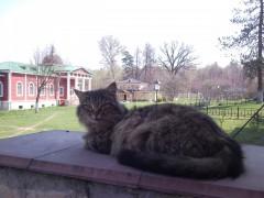 Кошка-мама )