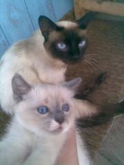 Кошки Скита