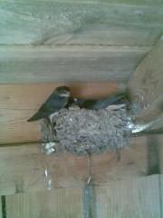 Перед вылетом из гнезда