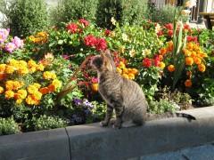 Красивая кошачья жизнь