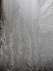Рождественские ёлочки на окне со стороны мощей о.Трофима