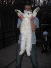 Шамординский кот