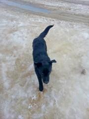 Здравствуй-здравствуй, мокрый пёс!