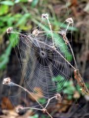 последняя паутинка
