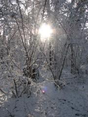 первый снег в лесу у скита