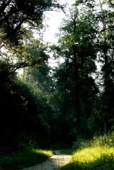 тропинка узкая