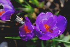 Оптинский цветочек... сестрам к празднику :-)