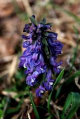 первые цветы этой весны